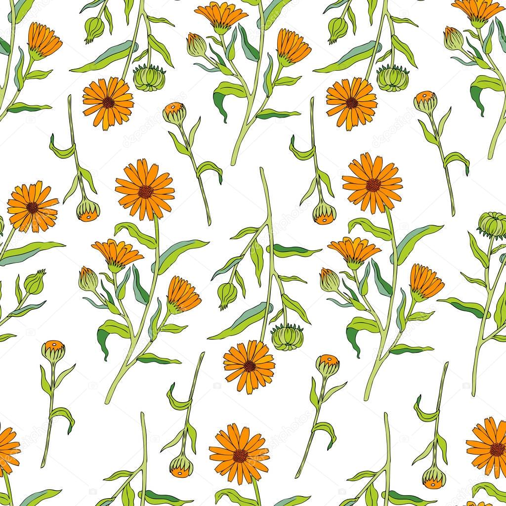 Seamless floral pattern with calendula flowers