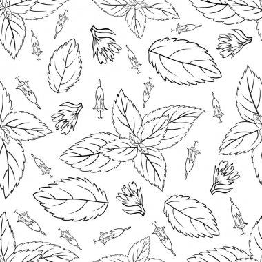 Mint leaves, peppermint buds isolated on white background, Hand drawn vector seamless patterns, spicy herbs, kitchen texture, Doodle cooking ingredient for design package tea, wallpaper, cosmetics