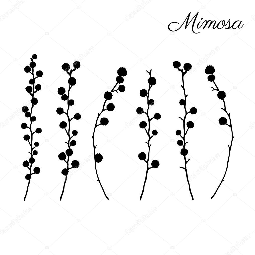 Mimosa flower hand drawn vector illustration isolated on white background, black silhouette doodle sketch, decorative floral element for design greeting card, wedding invitation, packaging cosmetics