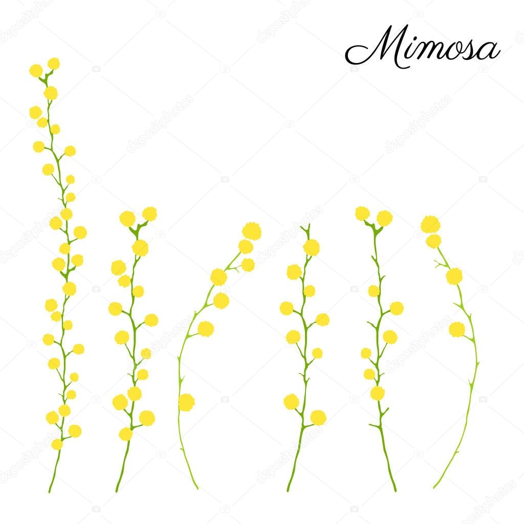 Mimosa flower branch hand drawn vector illustration isolated on white background, colorful doodle sketch, decorative floral element for design greeting card, wedding invitation, packaging cosmetics