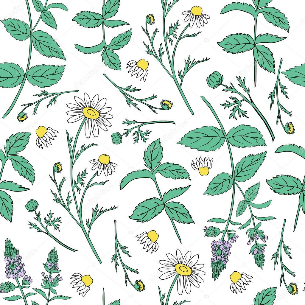 Seamless floral vector pattern, Mint leaves, peppermint buds, Chamomile wild field flower isolated on white background, hand drawn daisy doodle illustration for design package tea, cosmetic, medicine
