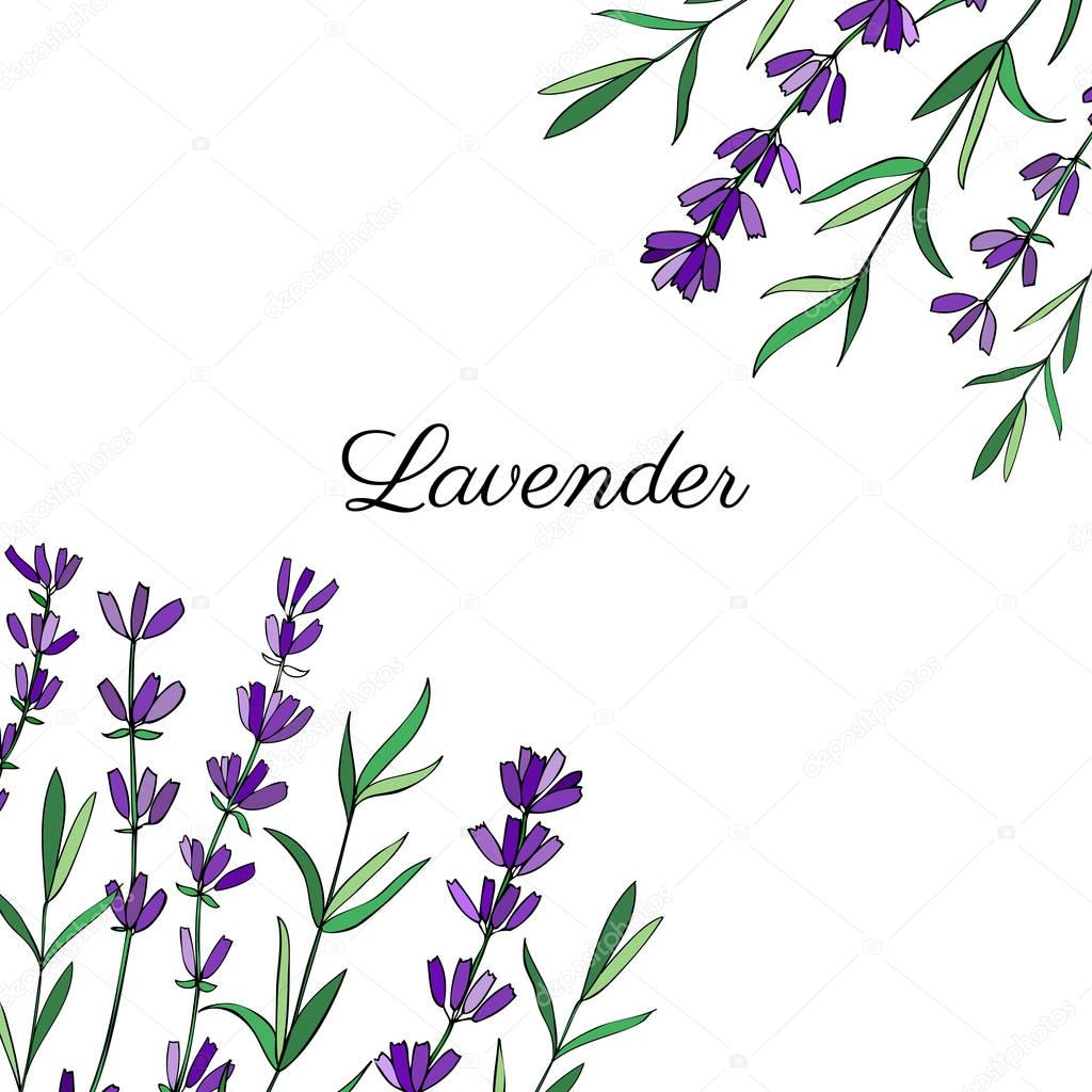 Lavender flowers, leaves hand drawn colorful doodle vector, decorative frame isolated on white, herbal vintage graphic border, design for package tea, natural organic cosmetic, medicine, greeting card