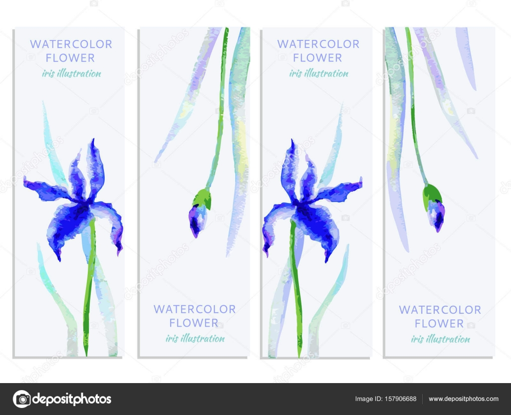 Vertical banners set with watercolor iris and leaves vector hand vertical banners set with watercolor iris and leaves vector hand drawn illustration decorative frame floral label for design beauty cosmetics izmirmasajfo