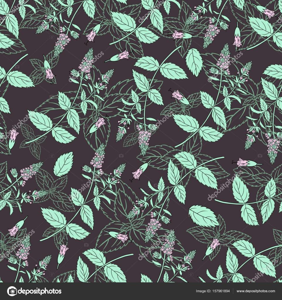Menta hojas, cogollos de hierbabuena aislados sobre fondo negro ...