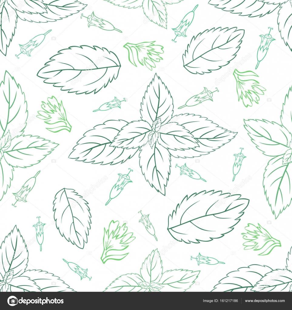 Menta hojas, cogollos de hierbabuena aislados sobre fondo blanco ...
