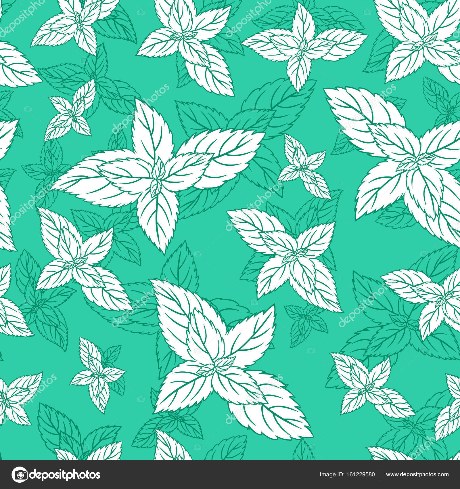 Mint leaf peppermint isolated on green background, Hand drawn vector ...