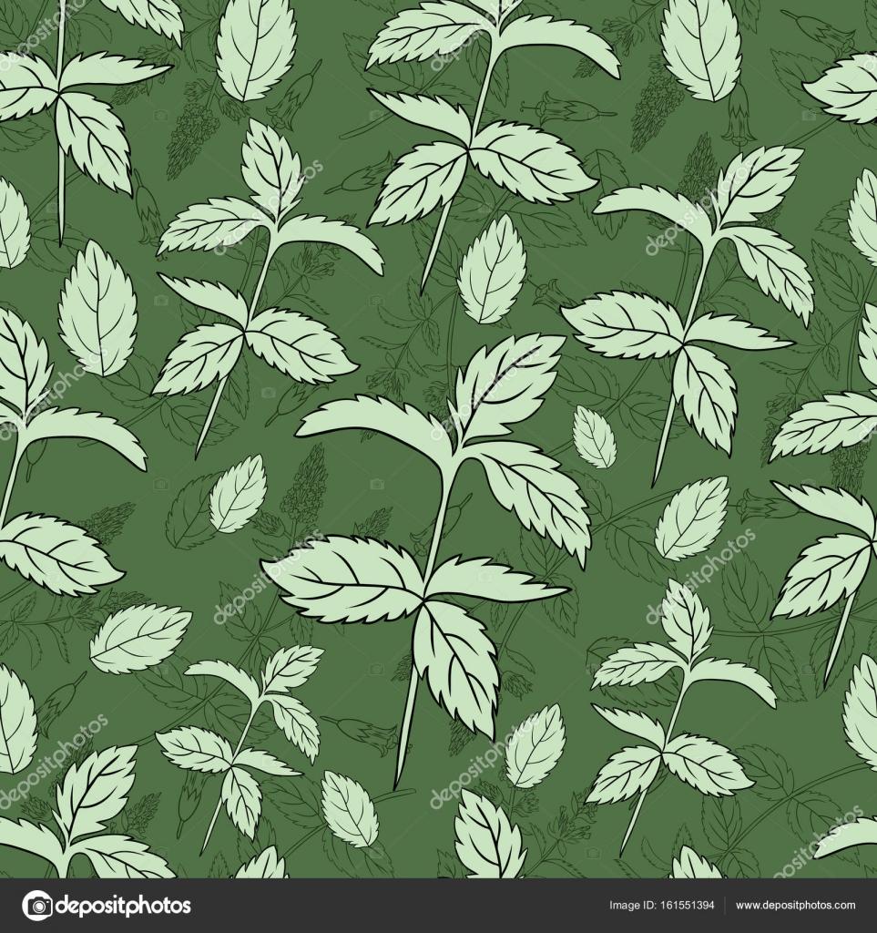 Menta de hoja de menta aislado en fondo verde, mano dibujado vector ...