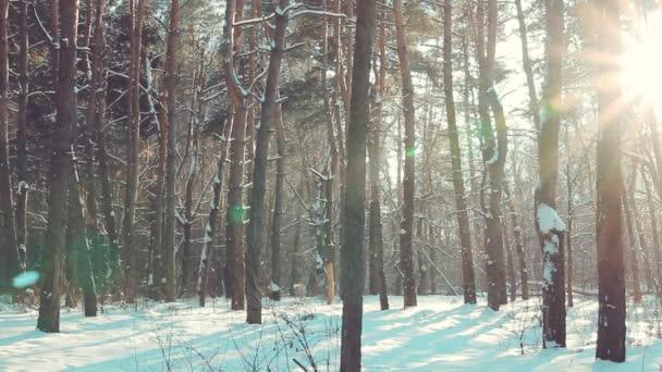 Schneefall im Winterwald