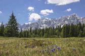 Bog, a Dolomitokban