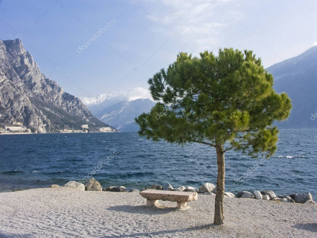 Pine on the beach promenade in Limone