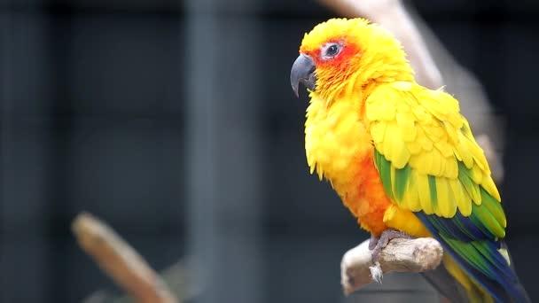 Roztomilý slunce Conure papoušek pták