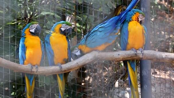 Čtyři modré a žluté papoušek sedí na větvi stromu