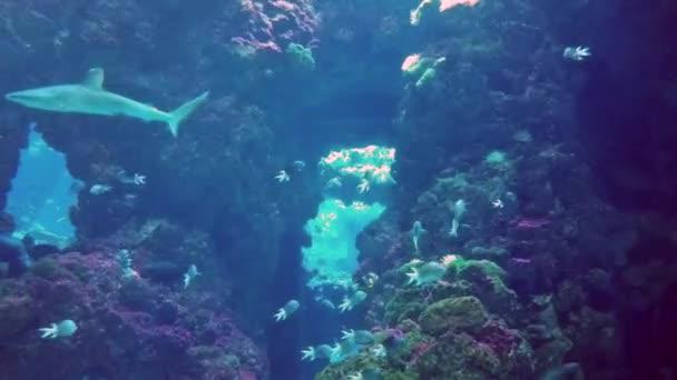 Krásný žraloky v akváriu