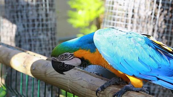 Krmit papouška ručně