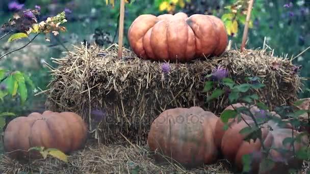 Halloween dýně a sena