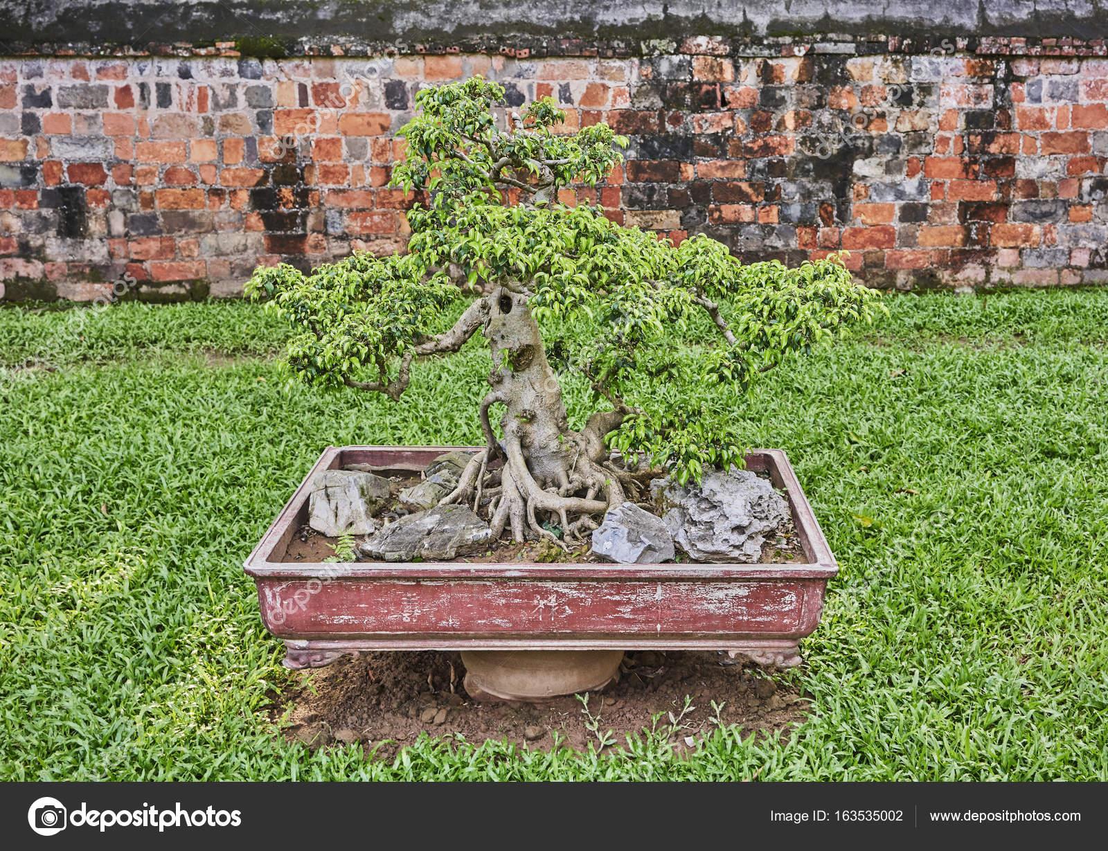 Boom In Pot Tuin.Bonsai Boom In Pot In Een Aziatische Tuin Stockfoto