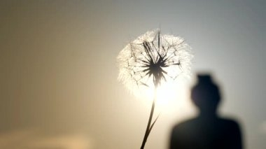 Dandelion on background of sky and the sight of a woman walking away in sunset.