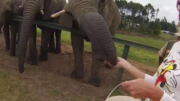 African elephants encounter