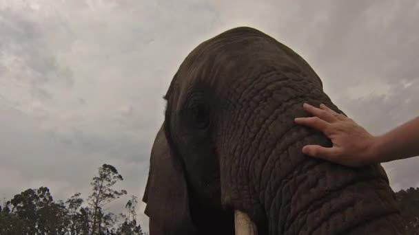afrikai elefánt etetés