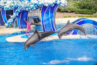 Two dolphins jumps