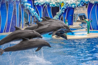 Dolphins jumping together