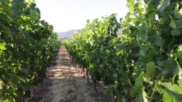 Napa Valley v Kalifornii