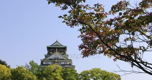 Fiore di ciliegio del Castello di Osaka