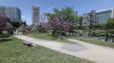 Garden Sakura Tokyo