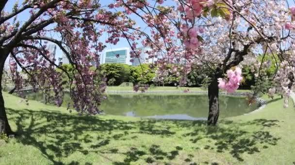 Orientální zahrady Sakura