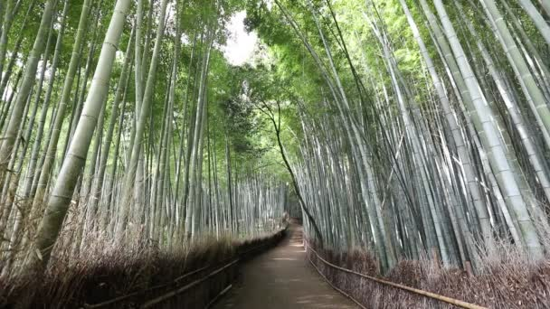 Woman walking in Bamboo Forest
