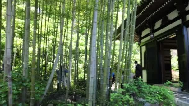 Bambusový háj pozadí