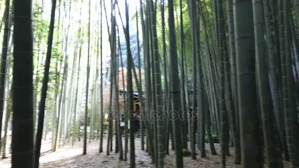 Bambusové zahradní časová prodleva