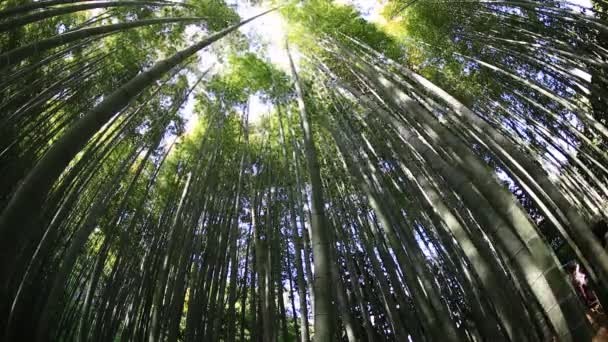 Bamboo grove background