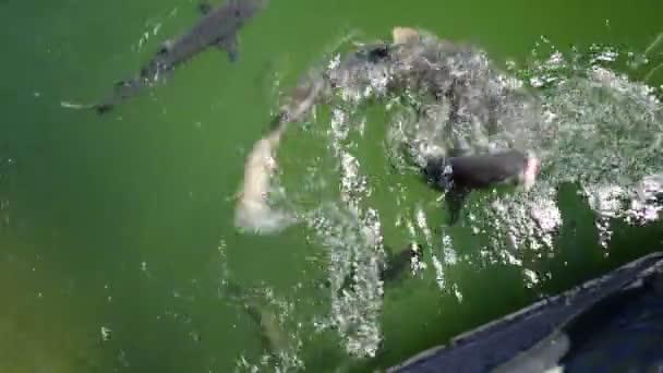 Žraloka jíst Austrálie