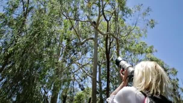 Naturfotograf mit Koala