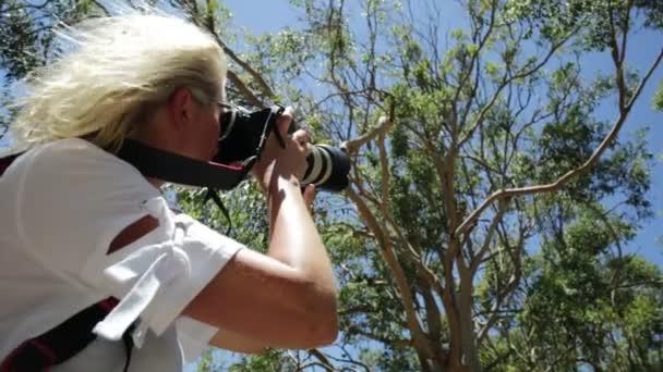 Vadon élő fotográfus, Koala