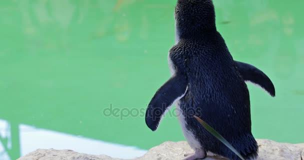Penguin, Ausztrália