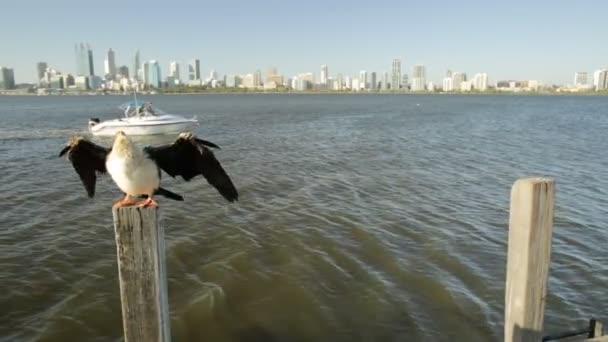 Vážka s panoráma města Perth