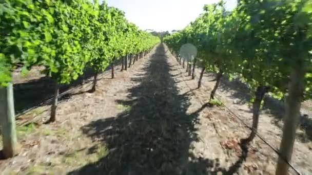 Margaret River vinice