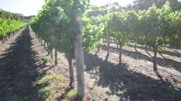 Západní Austrálie vinařství