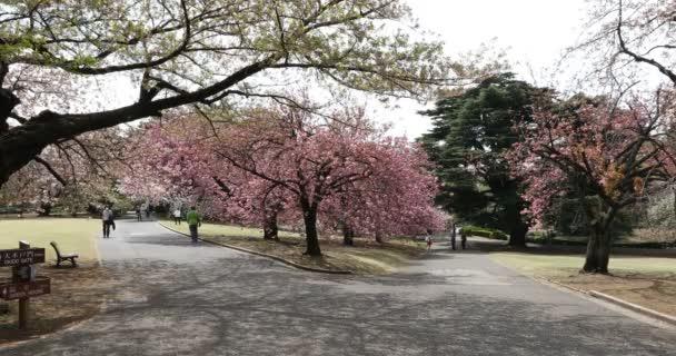 Japonská zahrada v Tokiu