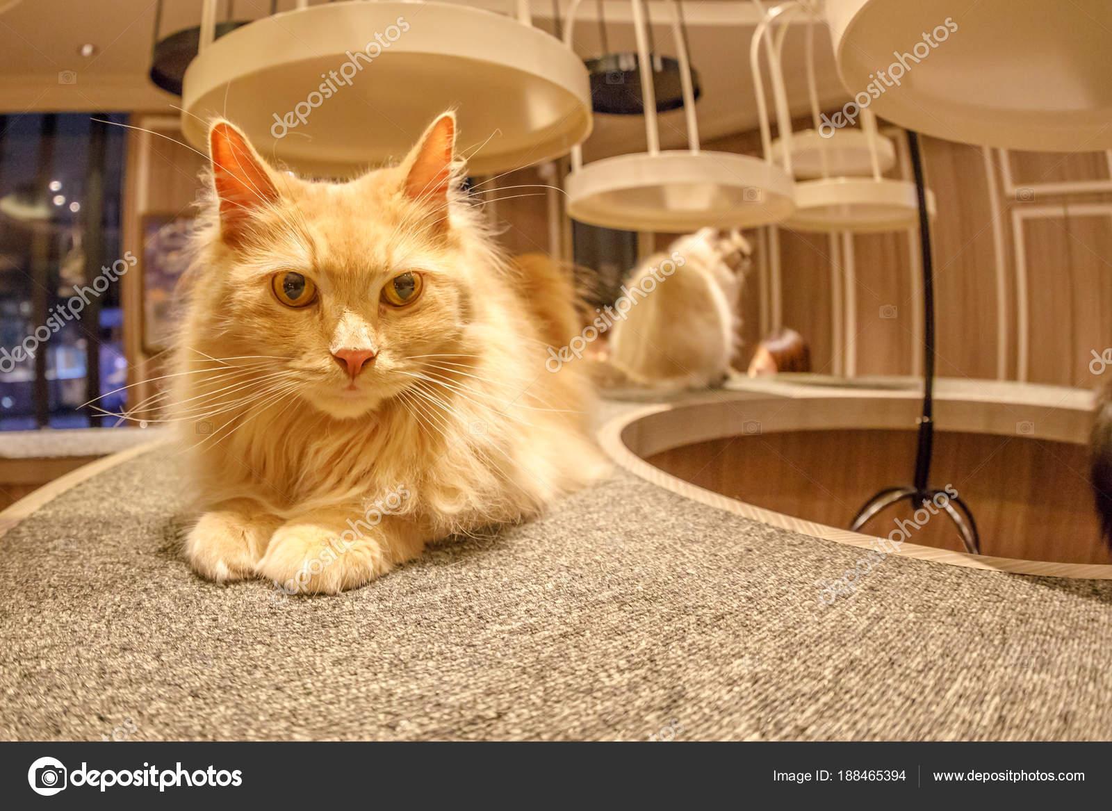 Kedi Cafe Mocha Stok Editoryel Fotoğraf Bennymarty 188465394
