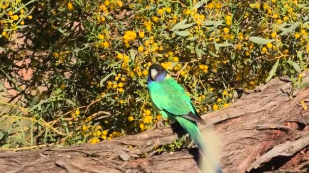 dvacet osm papoušků