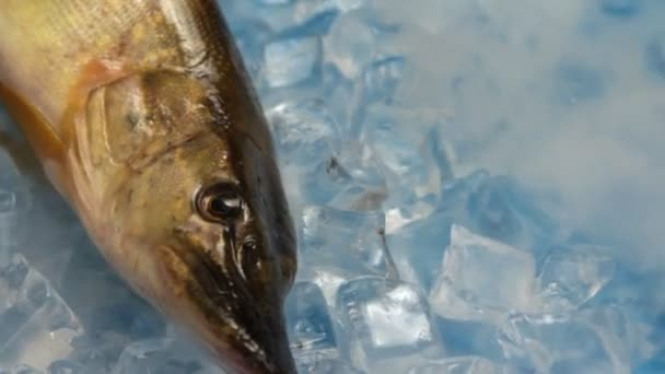 Fish pike in the ice on the turntable.