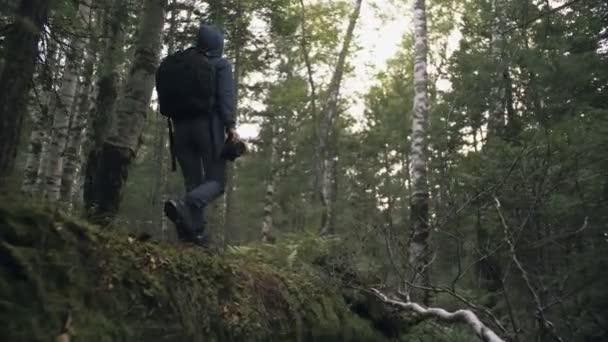 Cestovatel fotografování malebný pohled v lese. Jedna běloška střílí kouzelným pohledem. Dívka fotit video na dslr zrcadlo fotoaparát.