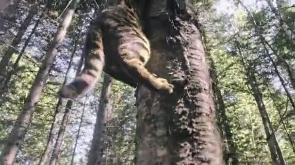 eine Katze in einem Stadtpark. bengal wildcat walk on the forest in collar. Asiatische Dschungelkatze oder Sumpf oder Schilf. domestizierte Leopardenkatze.