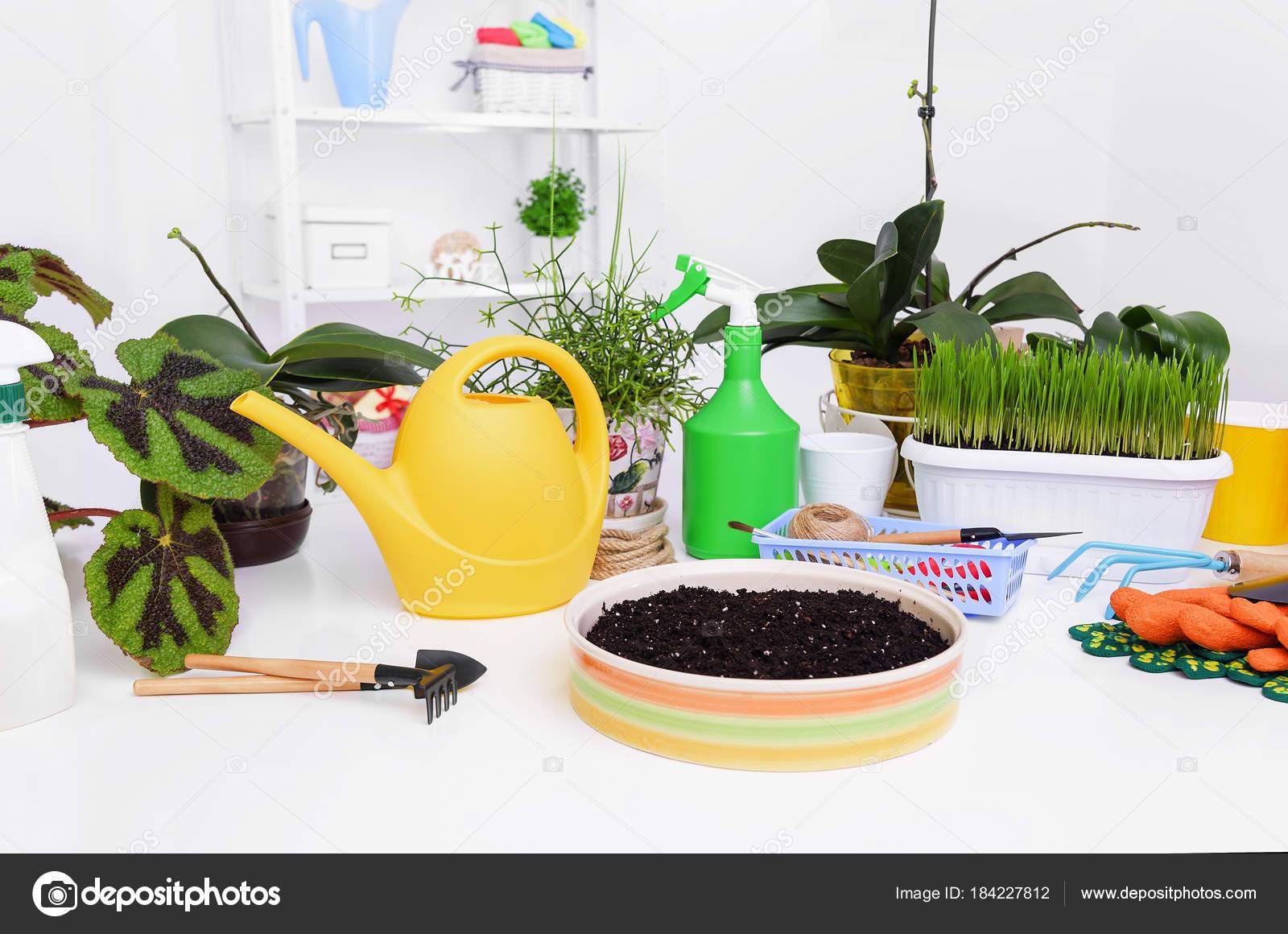 ПЕРЕСАДКА комнатных растений и цветов: как и когда ЛУЧШЕ? 89
