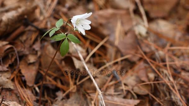 Wild nature. Spring wood. Nature of Siberia.