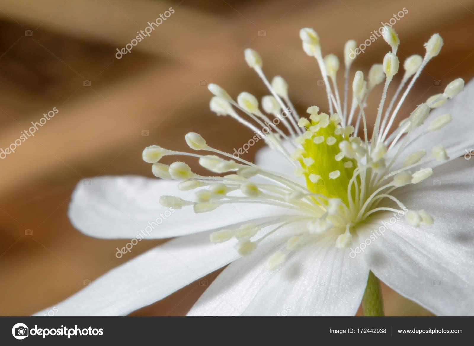 Schone Macrophoto Schneeglockchen Die Ersten Fruhlingsblumen Auf
