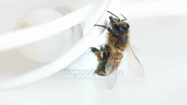 verloren Sie Biene, Klettern auf Draht weiße Kopfhörer gehen ...
